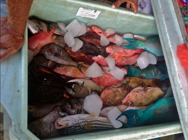 honiara market fish