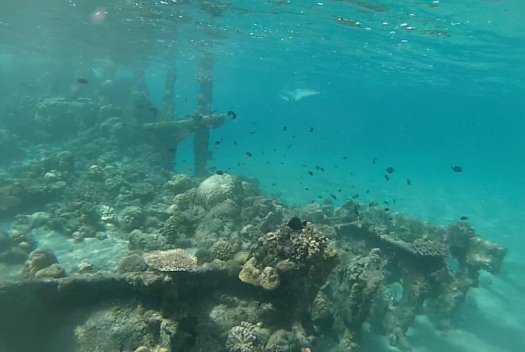 snorkelling at bonegi